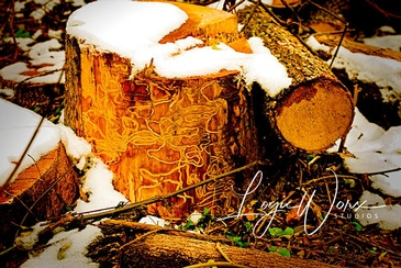 Tree Stump - Photography Services Whitchurch Bradford by LogicWorx Studios Inc.