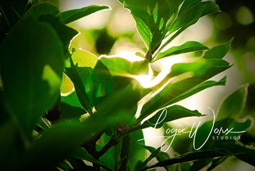 Green Leaves - Photography Shelburne by LogicWorx Studios Inc.