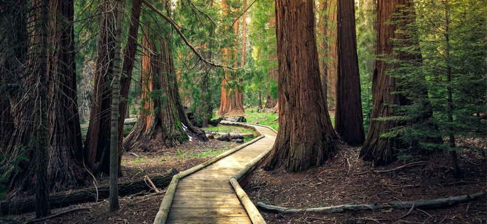 Sequoia National Forest - Blog by Sparkle Films LLC