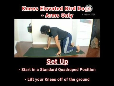 Bird Dogs Progression - Knees Elevated Bird Dogs - Arms Only