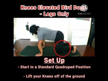 Bird Dogs Progression - Knees Elevated Bird Dogs - Legs Only