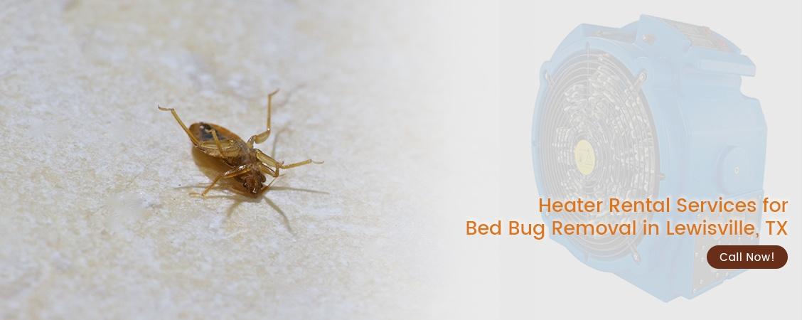 Bed Bug Removal Lewisville, TX