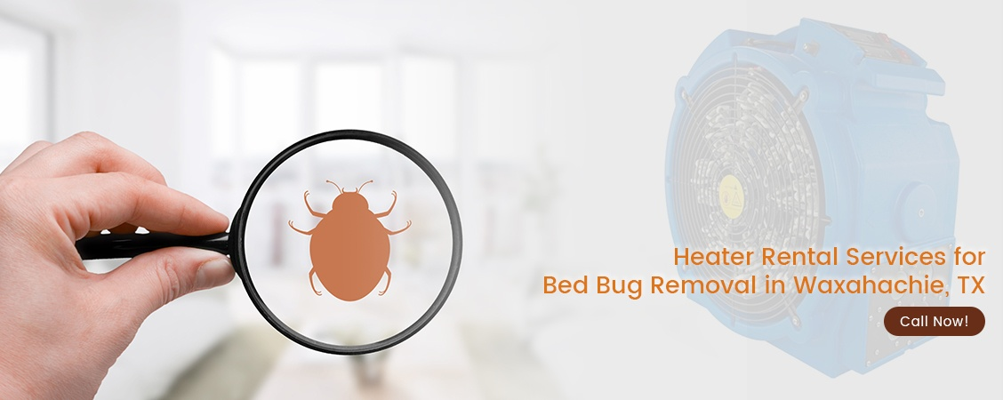 Bed Bug Removal Waxahachie, TX