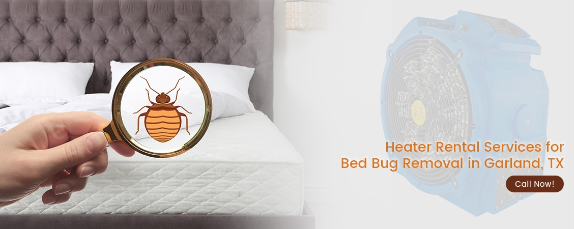 Bed Bug Removal Garland, TX