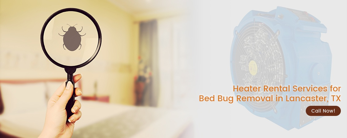 Bed Bug Removal Lancaster, TX