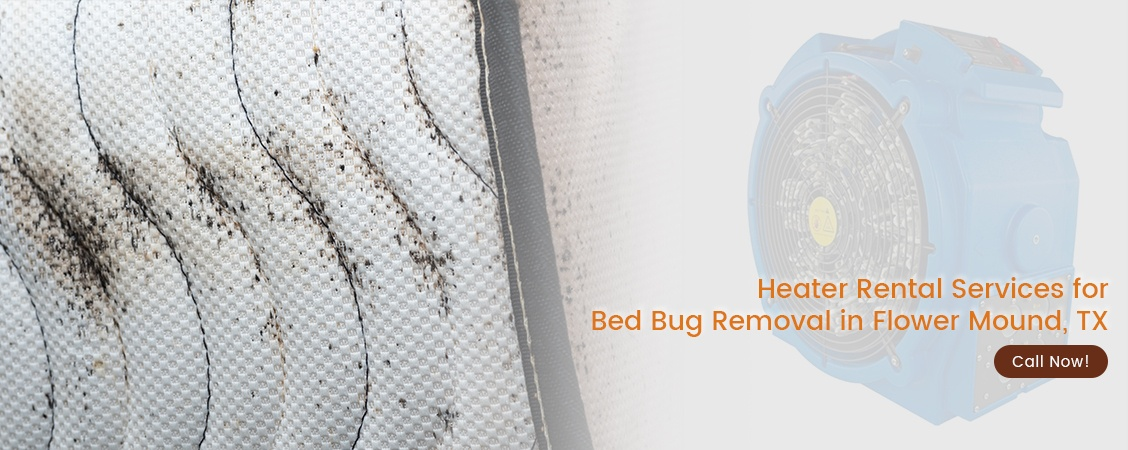 Bed Bug Removal Flower Mound, TX
