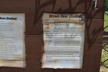 Additional Information on Brown Bear Kodiak at a Zoo - Wildlife Photography Belleville