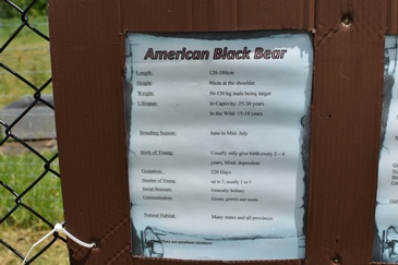 Additional Information on American Black Bear at a Zoo - Wildlife Photography Ottawa