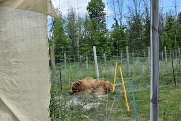 Brown Bear inside a protective Area - Wildlife Photography Ottawa