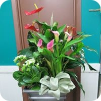 Planter Baskets by Flowers by Terry - Florist in Aurora