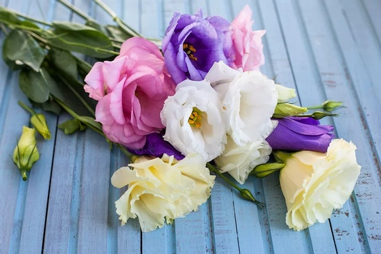 flowers_-5a3d5b9ee258f80036dbad7