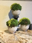 Beautiful indoor Moss plants in a white planter - Interior Decorating Services Fort Worth