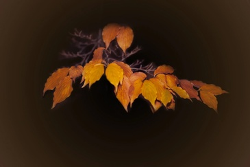 Dried up leaves - New Jersey Fine Art Photography by Phillip Angelo