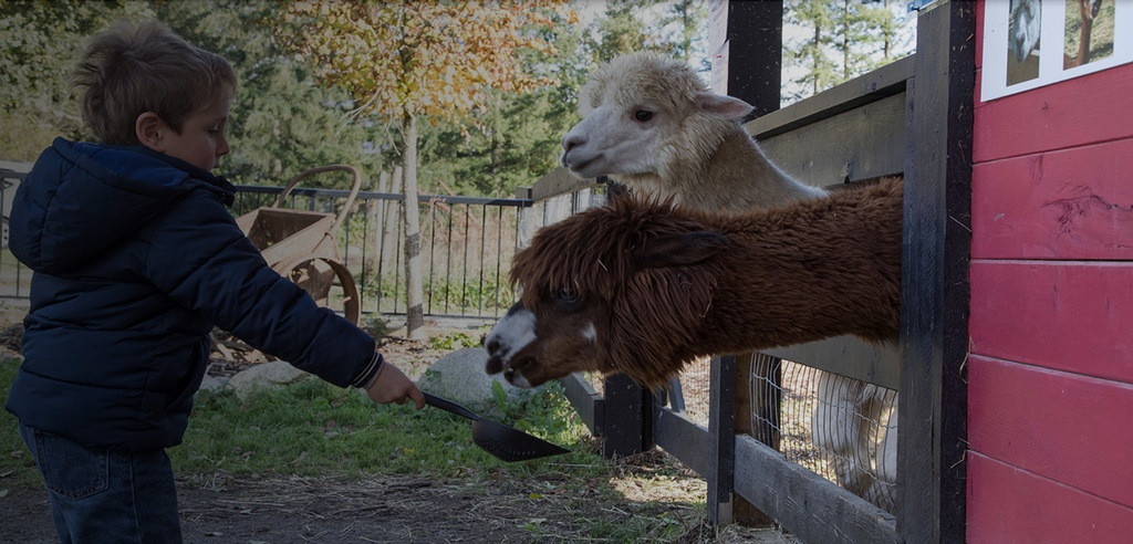 Petting Farm Maple Ridge